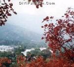 上海香山红叶