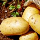 红皮黄心土豆